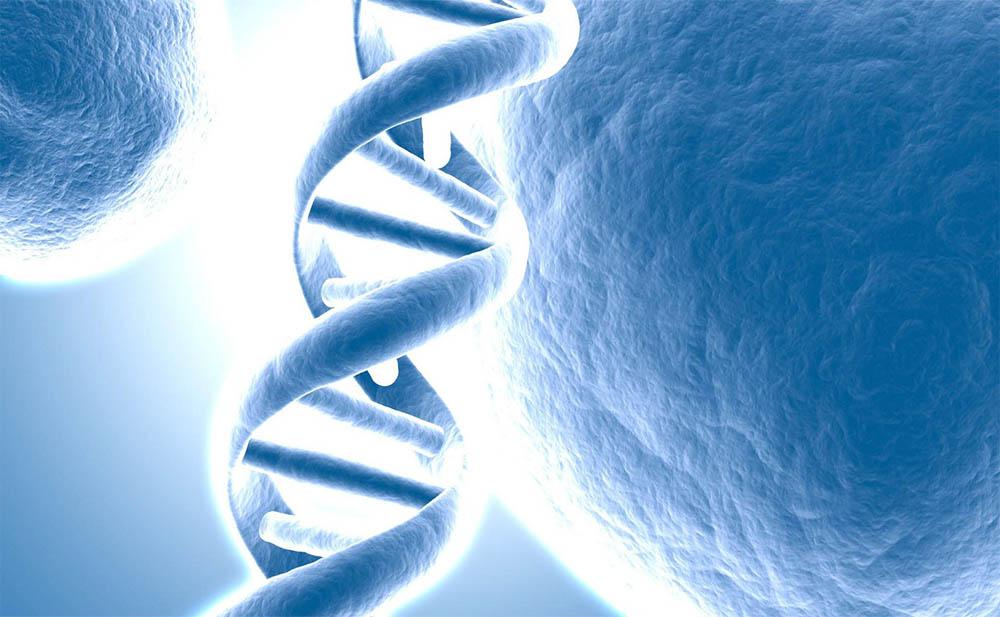 Tu Perfil ADN